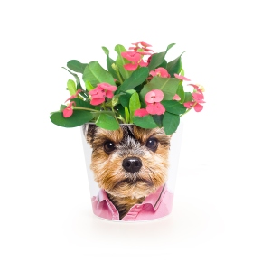 PetPot Yorkshire Terrier