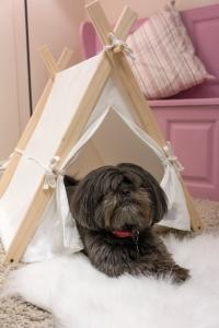 Little Ark A Frame Doggy Den.